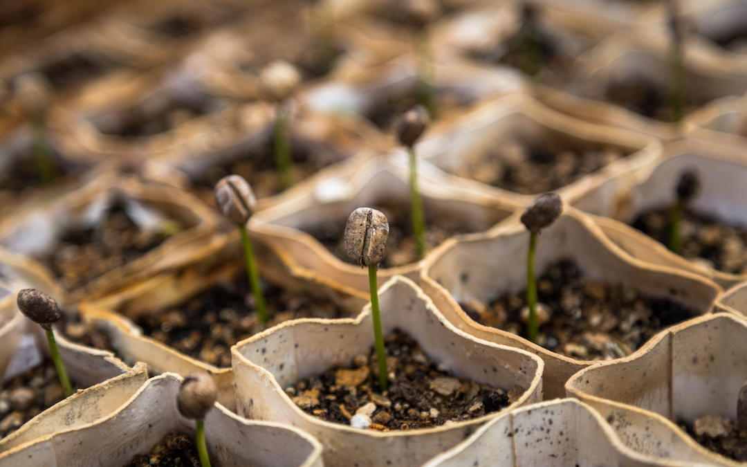 Impact Investing, Why Now?